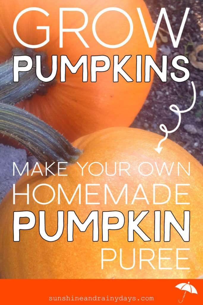 Grow Your Own Pumpkins And Make Homemade Pumpkin Puree