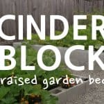 How to Build a Cinder Block Raised Garden Bed