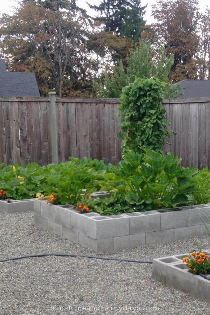 Concrete block raised garden beds.