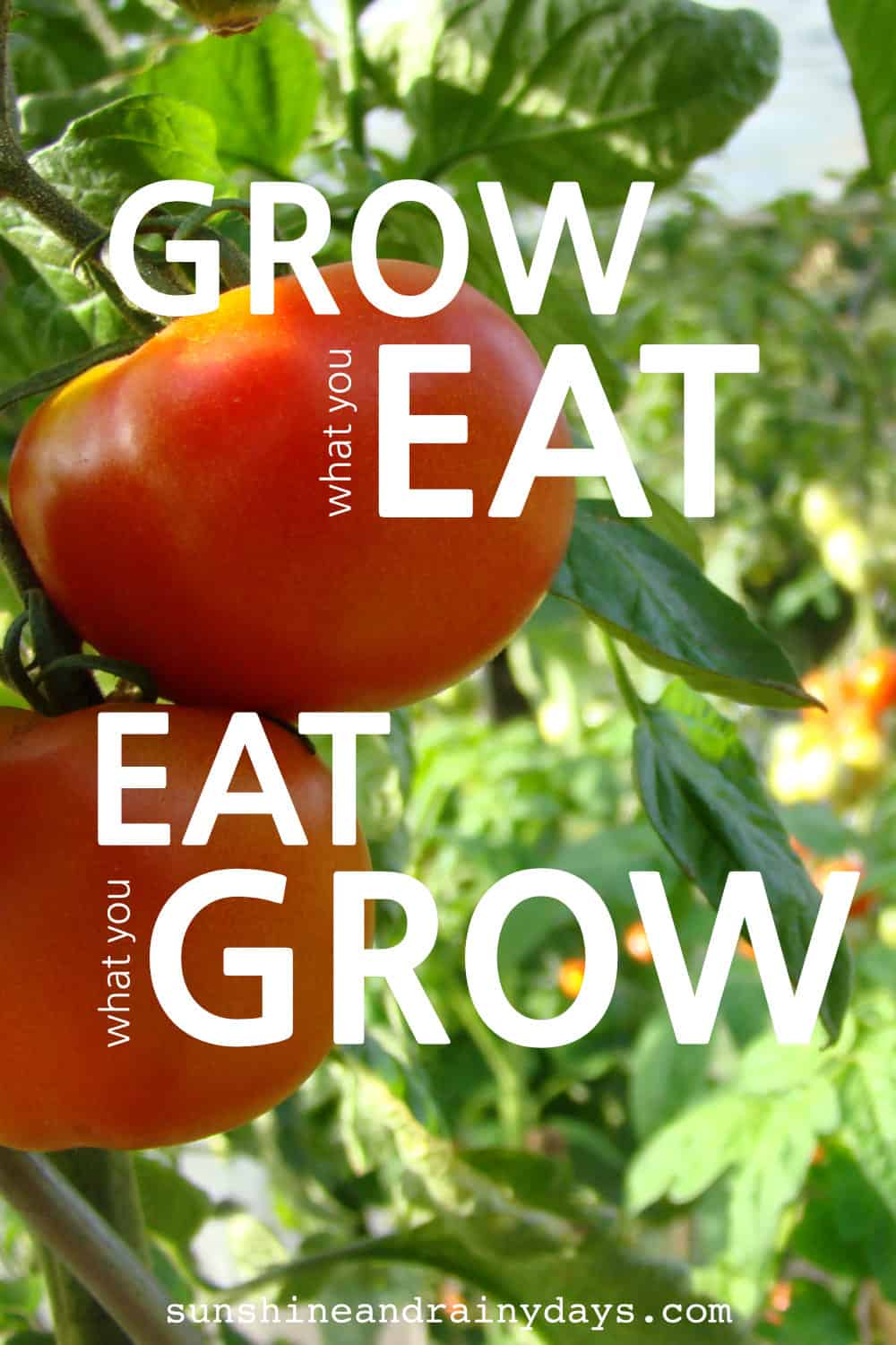 You've decided to take the plunge into the gardening world and grow your own fruits and vegetables! But what should you grow? After all, you do want to actually Eat what you Grow! Eat What You Grow | Grow What You Eat | Garden Ideas | Garden Plans | Garden Plan Printable #garden #gardening #gardeningtips #SARD