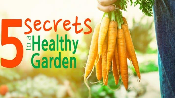 5 Secrets to a Healthy Garden