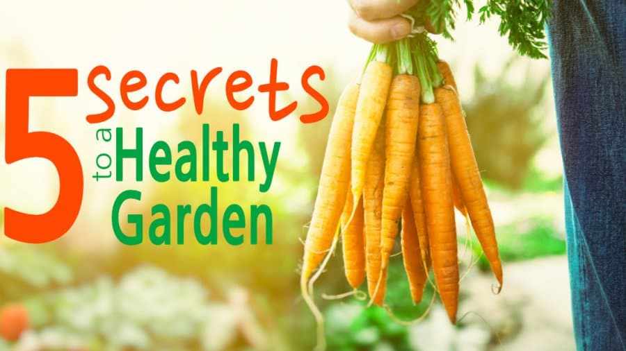 5 Secrets to a Healthy Garden