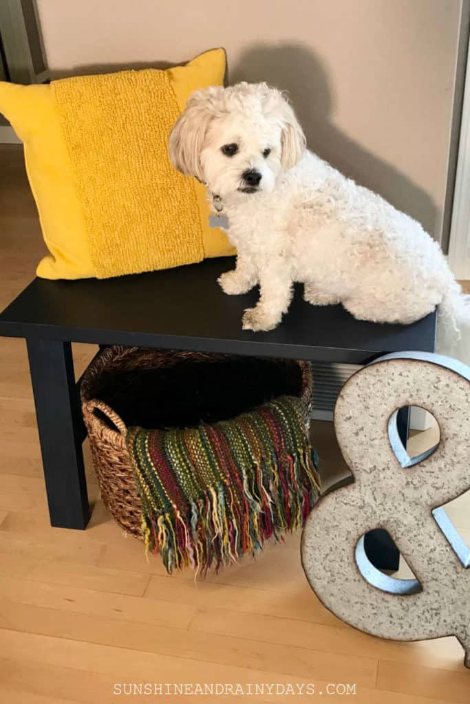 TeddiBear sitting on our new entryway bench that I built!