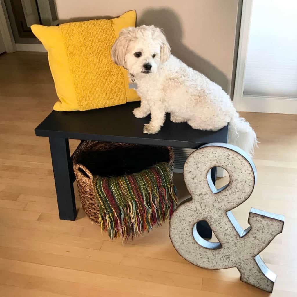 Our doge, Teddibear, sitting on our DIY Bench.